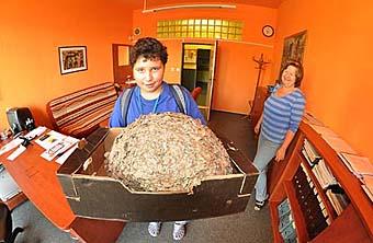 Dan věnoval škole vosí hnízdo...
