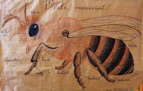 Obrázek včely nakreslila J. Kománková